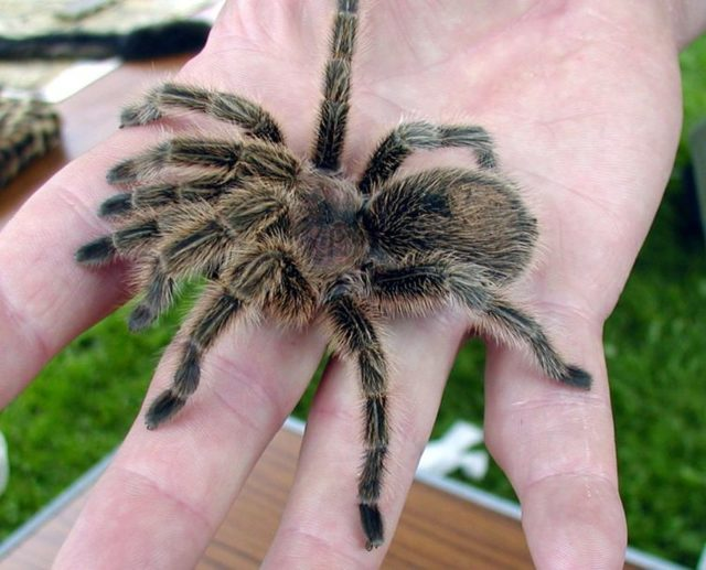 Боязнь пауков (Арахнофобия): что такое, фобия членистоногих, как избавиться