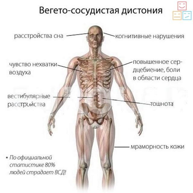 Вегетативный невроз: симптомы, лечение, проявление