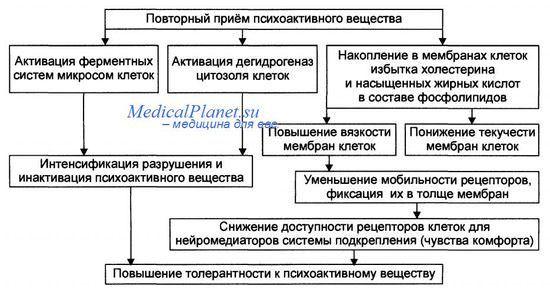 Физическая и психологическая зависимость
