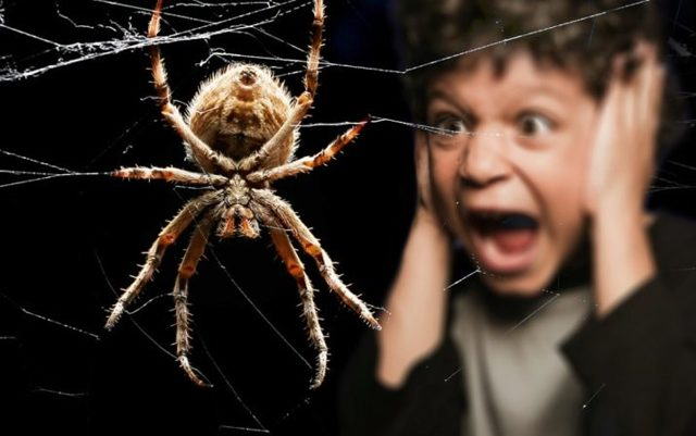 Боязнь насекомых — инсектофобия, описание фобии
