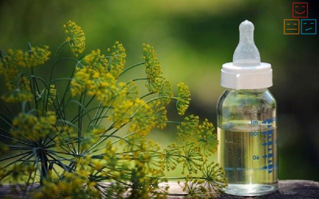 Успокаивающие травы для нервной системы на каждый день (подборка)
