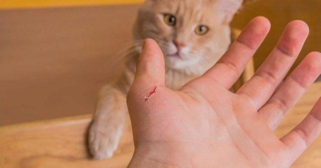Боязнь кошек: как называется фобия