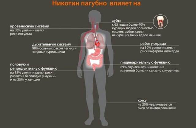 Влияние курения на органы дыхания: чем опасно,воспаление легких, дыхательная система