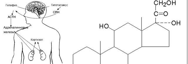 Гормон стресса кортизол: влияние на организм, что вызывает у человека, чем опасен