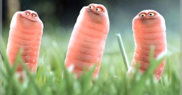 Боязнь червей, гусениц (Сколецифобия): название фобии, описание