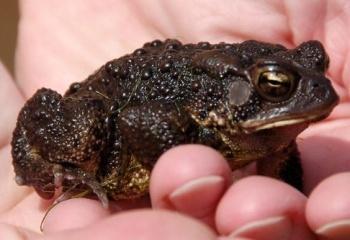 Боязнь лягушек и жаб: как называется фобия, способы борьбы со страхом