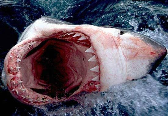 Боязнь акул: как называется, как проявляется