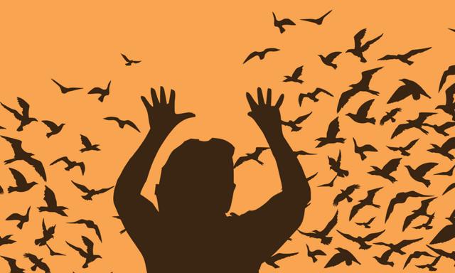 Боязнь птиц, голубей, название фобии — Орнитофобия, как избавиться