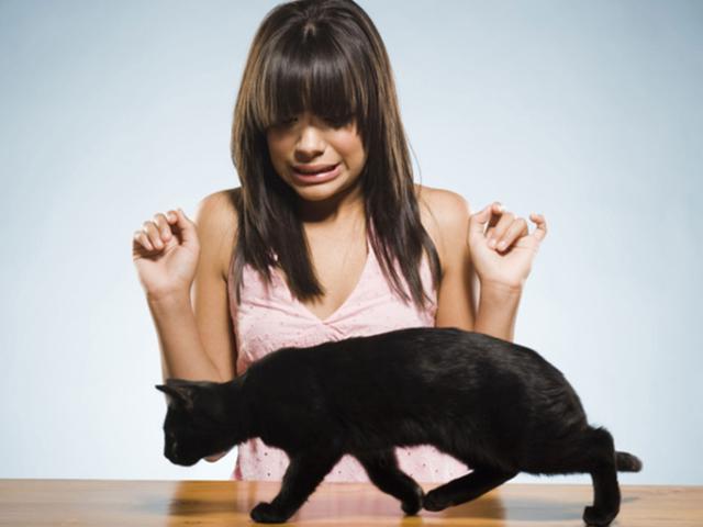 Боязнь диких зверей: зоофобия, агризоофобия