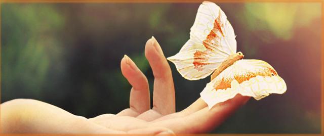 Боязнь бабочек (Лепидоптерофобия): как называется, причины, описание